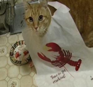 Can Cats Eat Imitation Crab