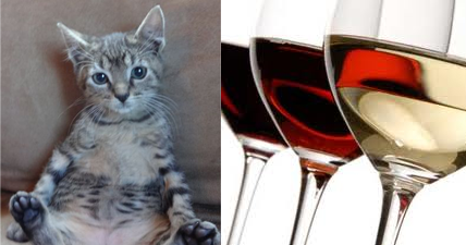 How can a cat resemble wine?